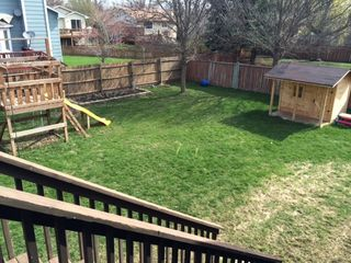 Backyard Grass
