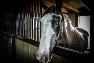 055_Horse IV
